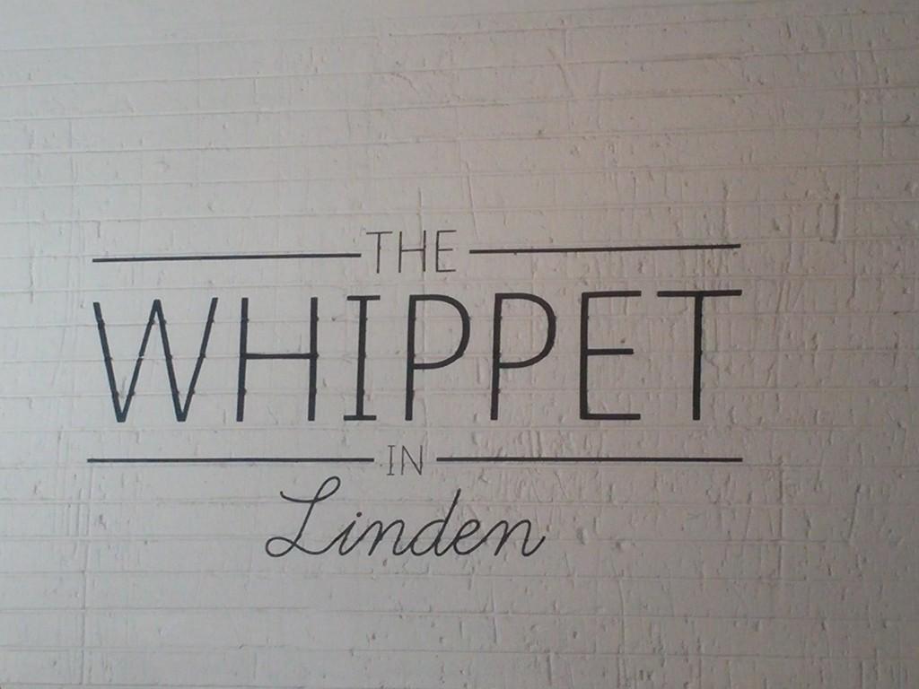 Whippet (Medium)